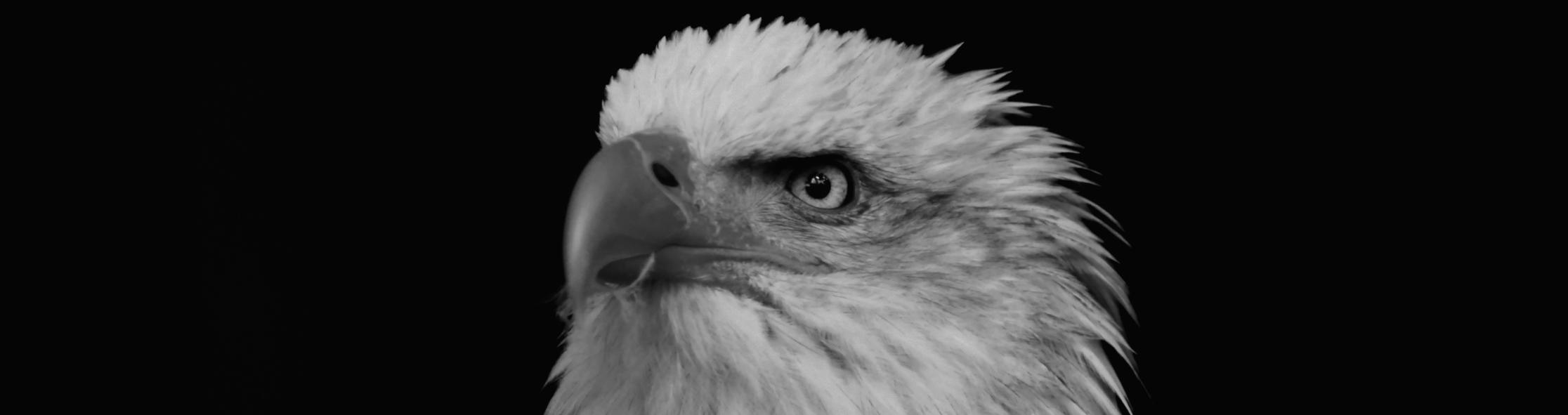 Dark Eagle Galerie Header